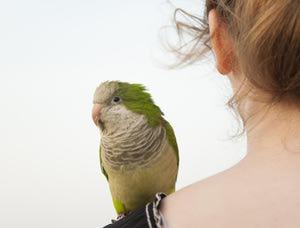 بیماری های قابل انتقال از طوطی به انسان