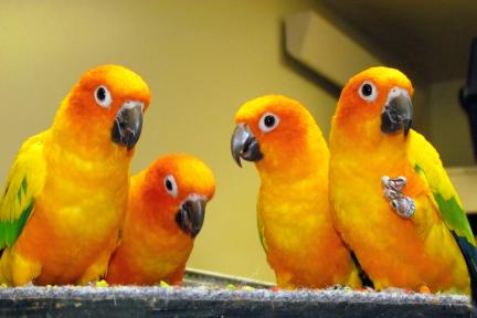 زیبا ترین طوطی ها