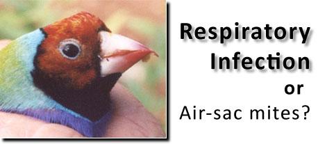عفونت کنه ای در سیستم تنفسی طوطی