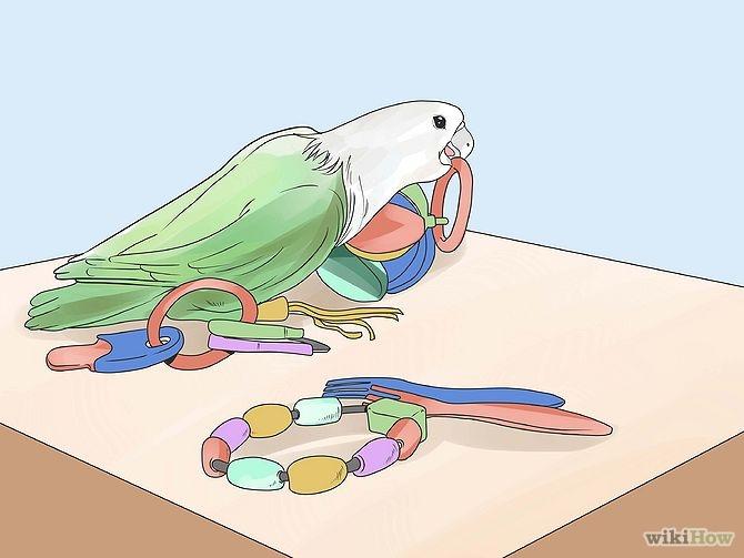 چطور با طوطی های بزرگ بازی کنیم؟4 چطور با طوطی های بزرگ بازی کنیم؟