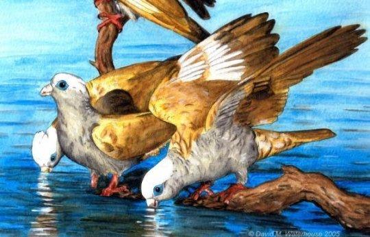 کشف فسیل 55 میلیون ساله طوطی ها در اسکاندیناوی