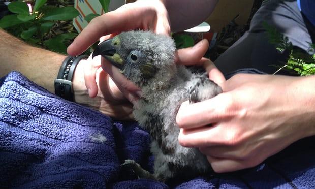 کشتن طوطی کاکا با مهربانی