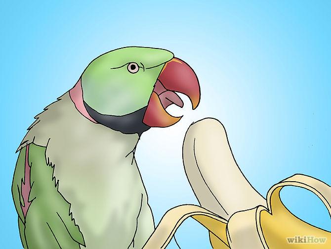 روش های مراقبت طوطی ( بخش دوم )