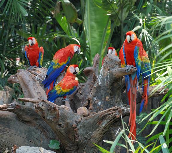 colorful parrots آمار جالب در مورد طوطی ها (Fun Facts About Parrots)