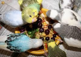 میوه ها و سبزیجات بهترین اسنک ها برای طوطی