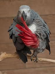 باید ها و نبایدها در مورد طوطی کاسکو