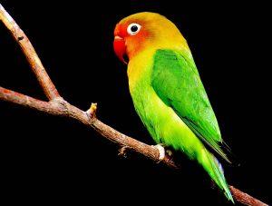 هورمون های بدن طوطی و نحوه تاثیر بر رفتار طوطی