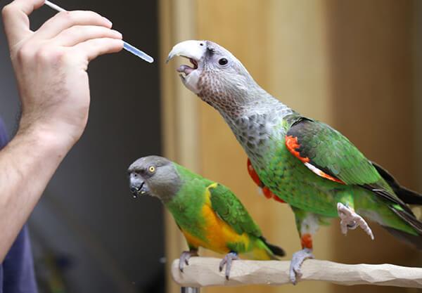 parrot_medication