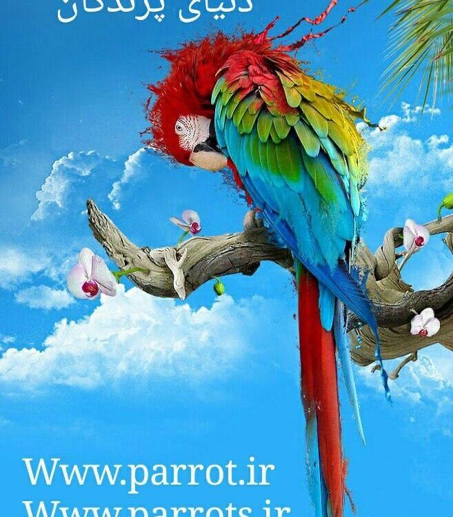 دنیای پرندگان