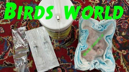 جوجه کاسکوهای دنیای پرندگان