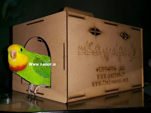 فروش انواع طوطی در دنیای پرندگان