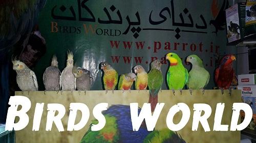 فروش فوق العاده جوجه عروس هلندی در دنیای پرندگان