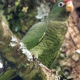 طوطی آمازون توکومان